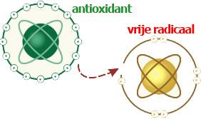 vrije radicalen en antioxidanten